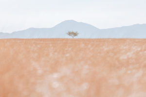 Lone Tree on the U.S. / Mexico Border
