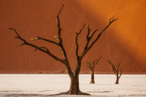 Acacia in Deadvlei II